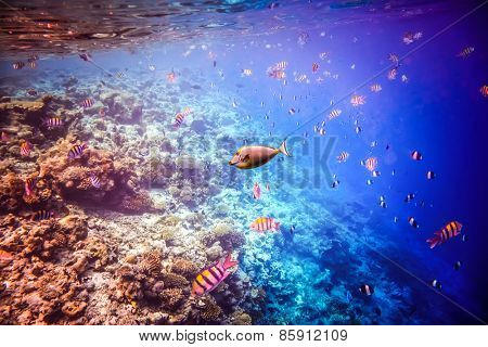 Reef with a variety of hard and soft corals and tropical fish.Maldives - Ocean coral reef.
