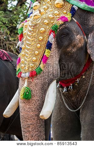 Elephant decorated on holiday in India