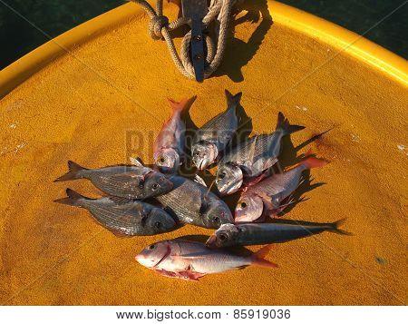 Fresg Fish