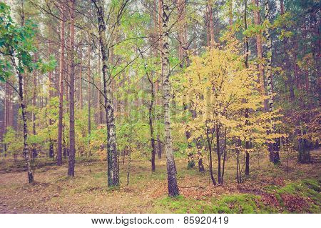 Vintage Photo Of Forest Landscape