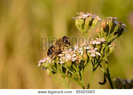 Simple Wasp On Summer Flowers