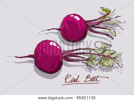 Vector Illustration Of Red Beet