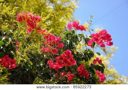 Bright Pink Flower Bush