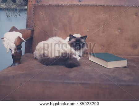 Cute And Clever Cat With Book On Sofa