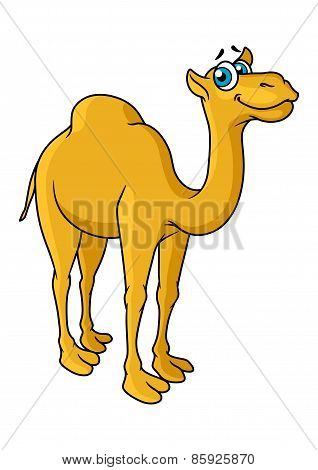 Fun cartoon camel animal character