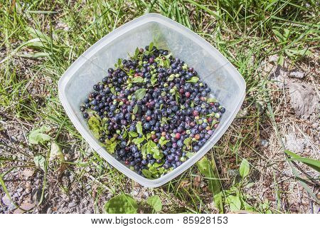 Uncleaned Blueberrys