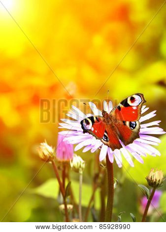 Bright butterfly on lilac flowers