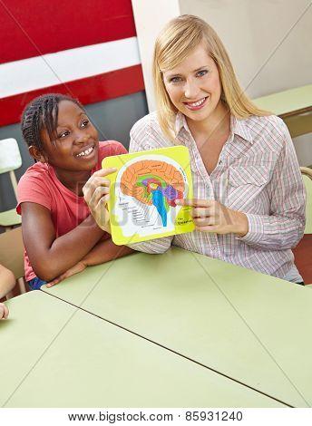 Teacher showing model of human brain in elementary school