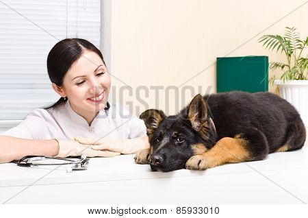 German Shepherd puppy and vet