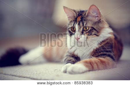 Portrait Of Multi-colored Striped A Cat
