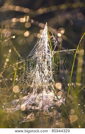 Blur Dewy Summer Meadow Grass With Spiderweb Background