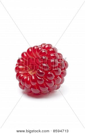 Single red edible Japanese Wineberry