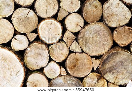 Oak logs cutted and stacked