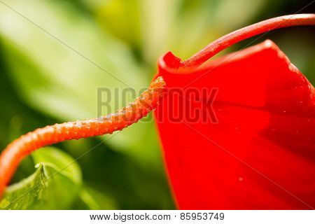red macro