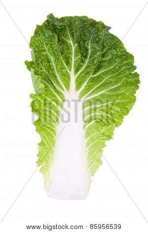 Chinese Cabbage Leaf