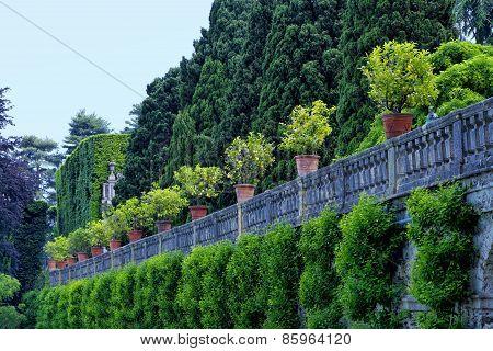 Lemon trees in terracotta pots in beautiful green garden