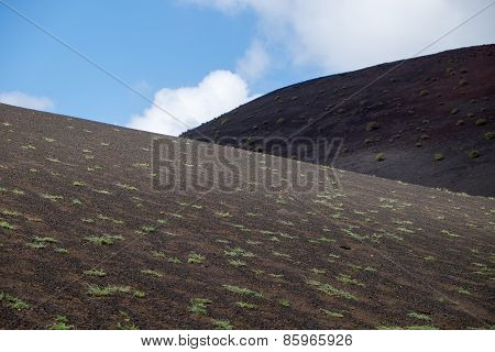 Vegetation/lava