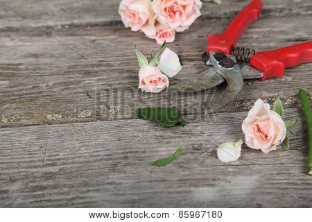 Bouquet Of Pink Roses And Secateurs