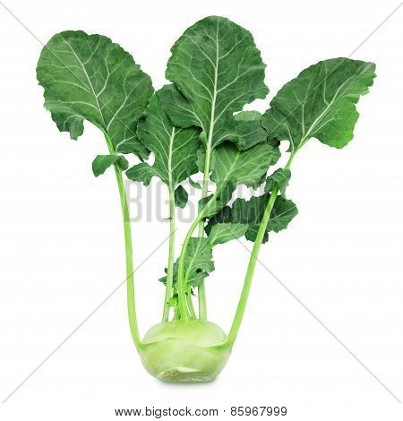 Kohlrabi with leaves on isolated white backround