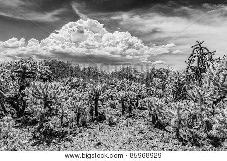 Cactus Shrubs In Desert