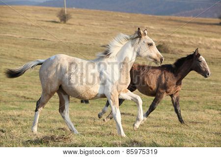 Two Horses Running Together
