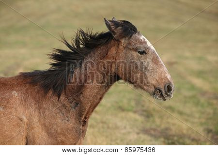 Young Brown Horse Running