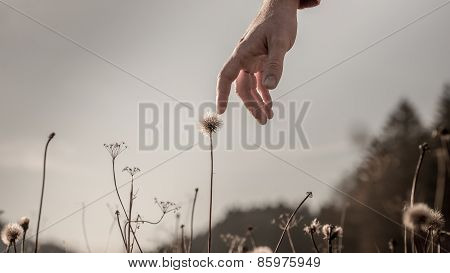 Man Gently Touching A Delicate Dandelion Clock
