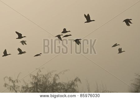 Early Morning Flight Of Ducks Above Foggy Marsh
