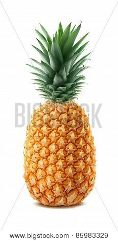 Whole Pineapple Isolated On White Background