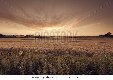 Beautiful Sunset Over Summer Field