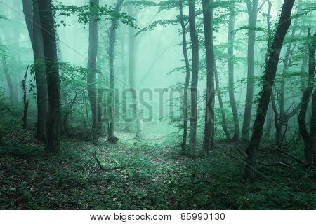 Trail Through A Mysterious Dark Forest In Fog With Green Leaves.