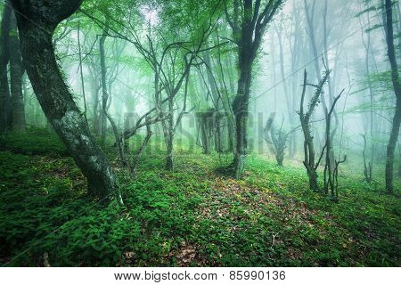 Trail Through A Mysterious Beautiful Forest In Fog With Green Leaves