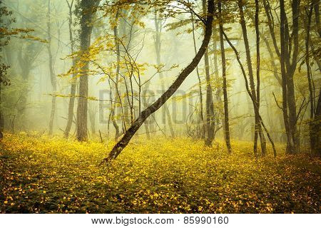 Mysterious Forest In Fog With Orange Leaves And Yellow Flowers