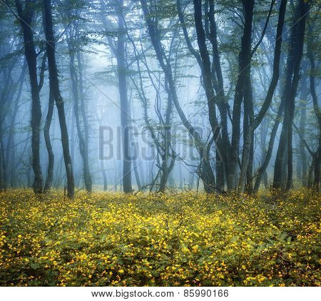 Mysterious Dark Forest In Fog With Green Leaves And Yellow Flowers