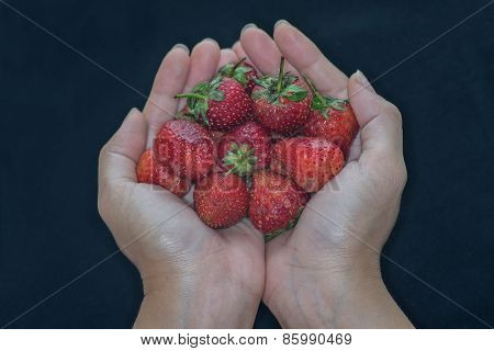 Cupped Hands Holding Fresh Strawberries