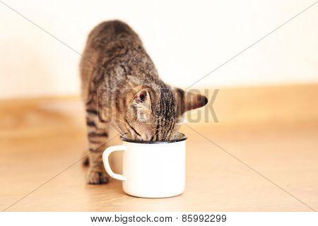 Kitten drinking from mug, indoors