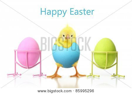 Cute little chicken and Easter eggs isolated on white background