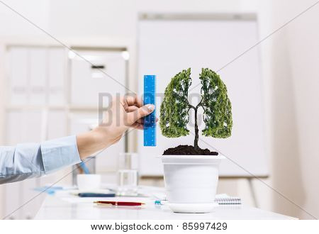 Close up of human hand measuring tree in pot with ruler