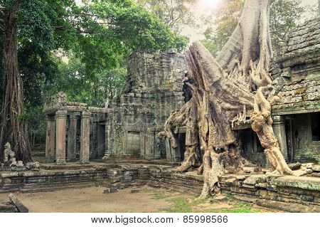 Ruins Of Ancient Temple Lost In Jungle