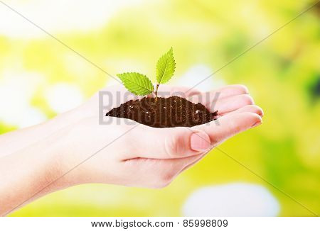 Plant in hands on sunny nature background