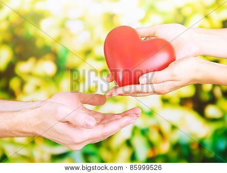 Red heart in hands on sunny nature background