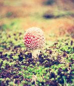 stock photo of toadstools  - Beautiful red autumnal toadstool  - JPG