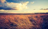 stock photo of grassland  - Landscape with withered grassland photographed in afternoon light - JPG