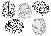 stock photo of orientation  - Black and white human brains showing different orientations for a medical and science design concept - JPG