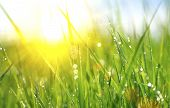picture of sun flare  - Grass - JPG