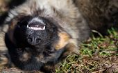 stock photo of dog teeth  - Stray dog lies on his back and shows his teeth - JPG