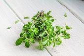 image of origanum majorana  - Green marjoram herb leaves on a white wooden background - JPG