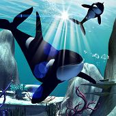 picture of orca  - Underwater world with funny playing orca - JPG