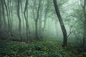 stock photo of mystery  - Trail through a mysterious dark forest in fog with green leaves and yellow flowers - JPG