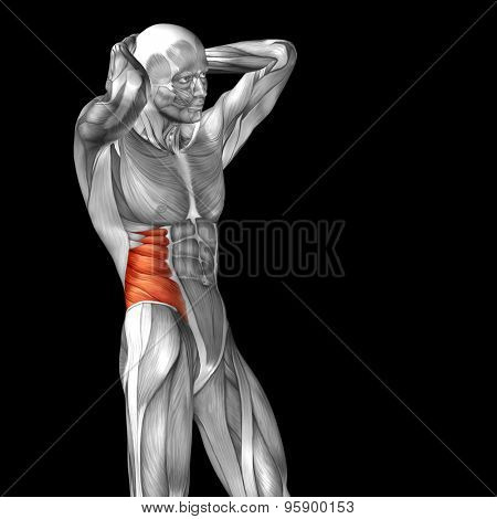 Concept or conceptual 3D chest human anatomy or anatomical and muscle isolated on black background